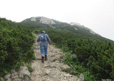 039 VZPON NA SNEŽNIK, na poti od Sviščakov proti SVelikemu Snežniku - med ruševjem in cvetjem - cilj je že blizu, 11.29
