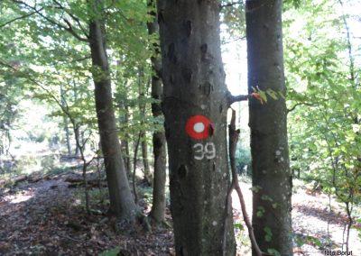 06 SLJEME, po poti številka 39 proti planinskemu domu na Hunjki, 9.19